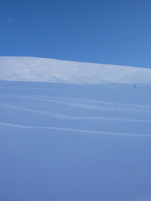 Lone skier in a sea off powder, Cairngorm Photo: Dan Goodwin, 27 kb