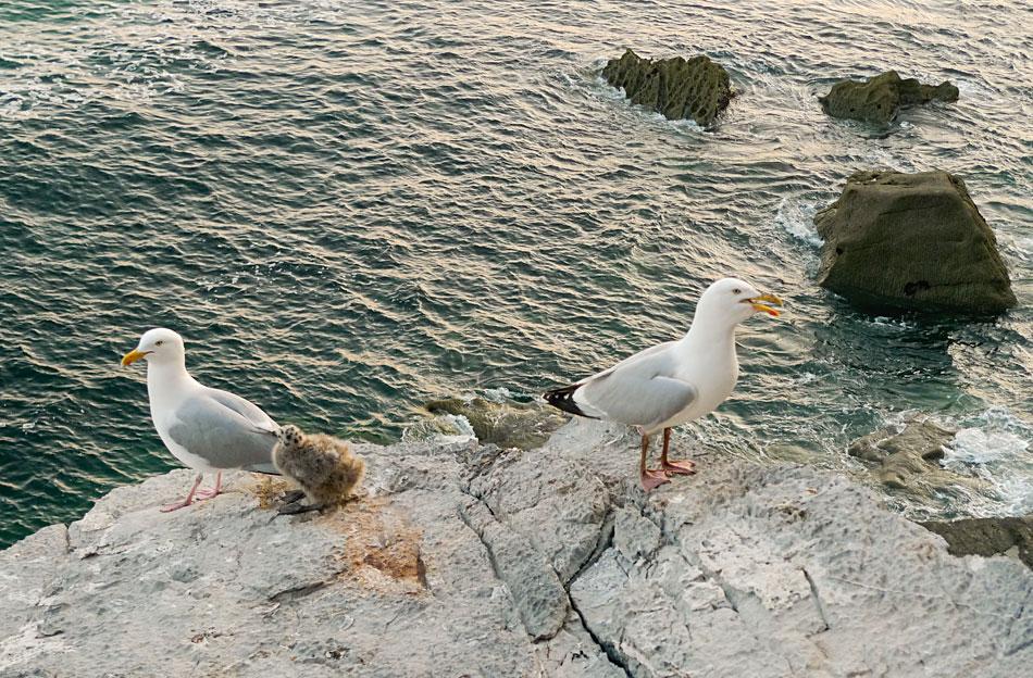 Birds in Pembroke, 234 kb