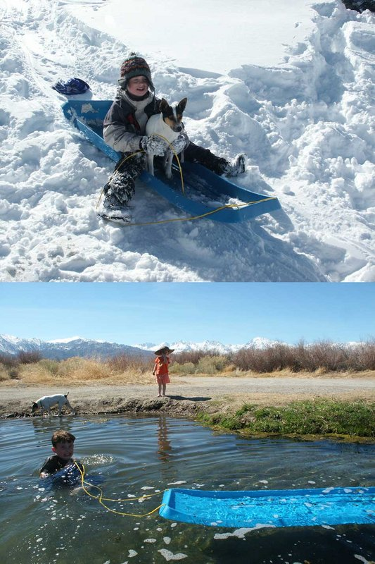 On the same day. Xaver and Felicity Ryan, and Spud the dog enjoy sledding in the morning and swimming in the afternoon., 107 kb