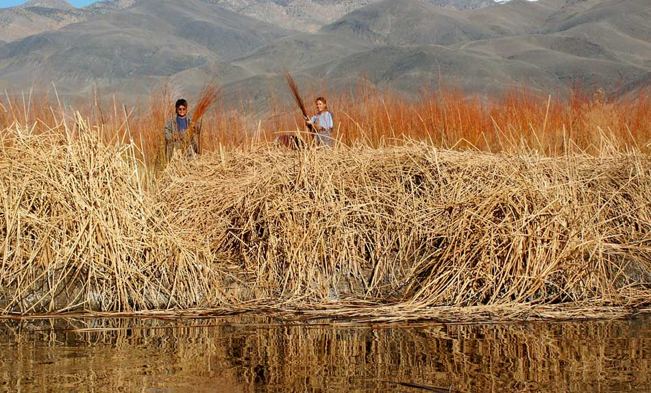 Piute woman collecting reeds for weaving by the Owens River - which is excellent for trout., 135 kb