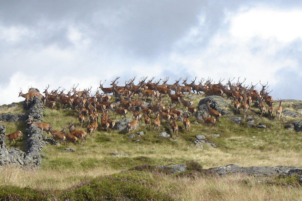 Stag Party on Duchray Hill, 170 kb