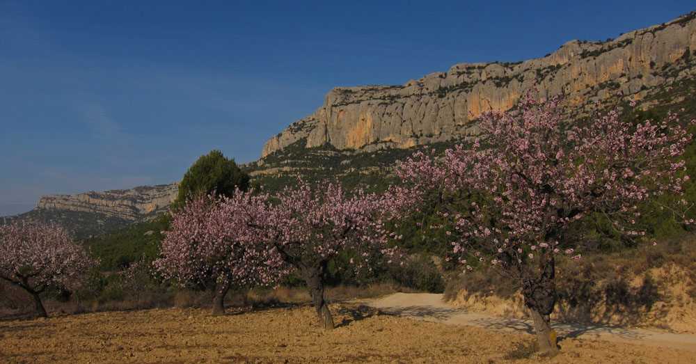 The beautiful scenery around Morera de Montsant, with the almond trees in full blossom and the never-ending crags of Montsant b, 152 kb