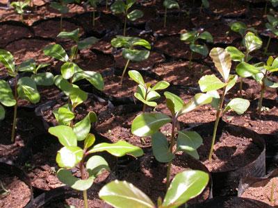 Beal - Plant A Tree #3, 49 kb