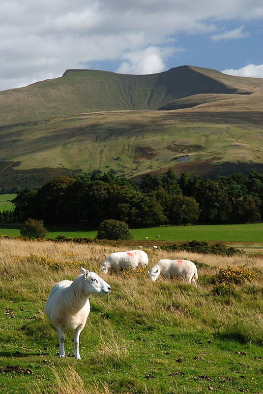 Brecon Beacons, 101 kb