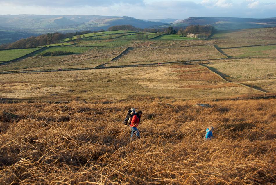 Hathersage Owler Tor - Family Walk, the bracken below Owler Tor, 192 kb
