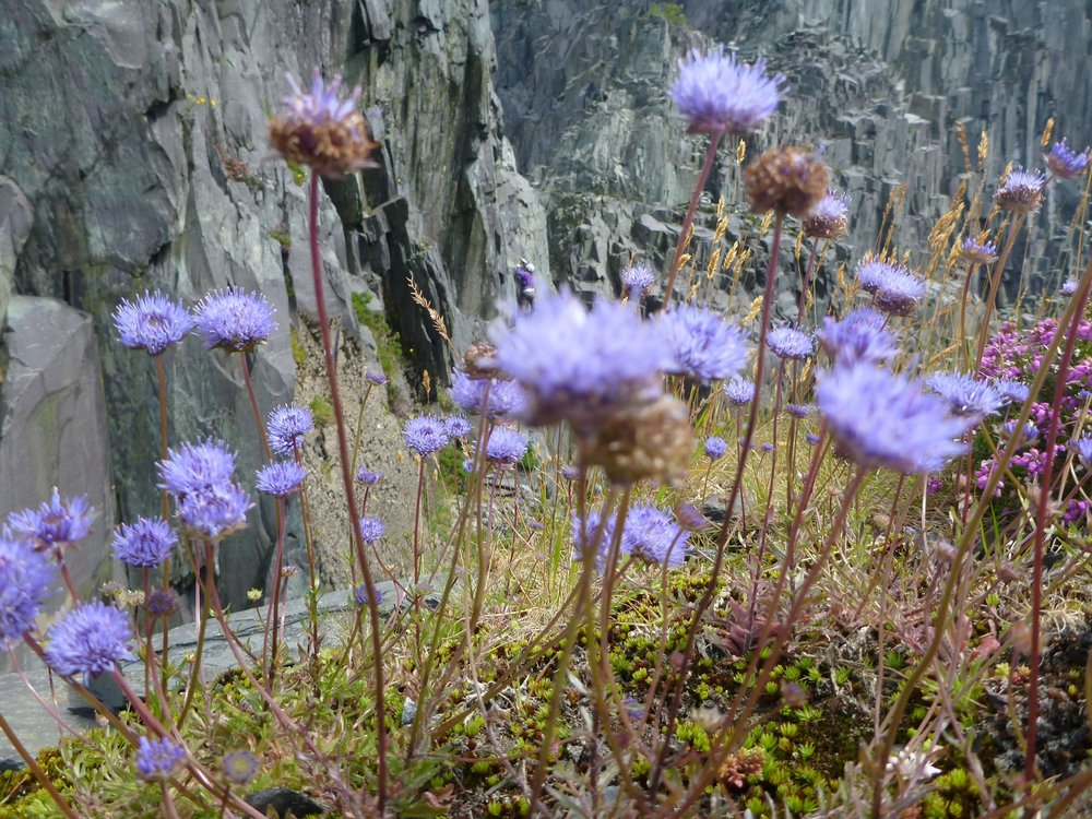 Out of the flower onto the crag, 217 kb