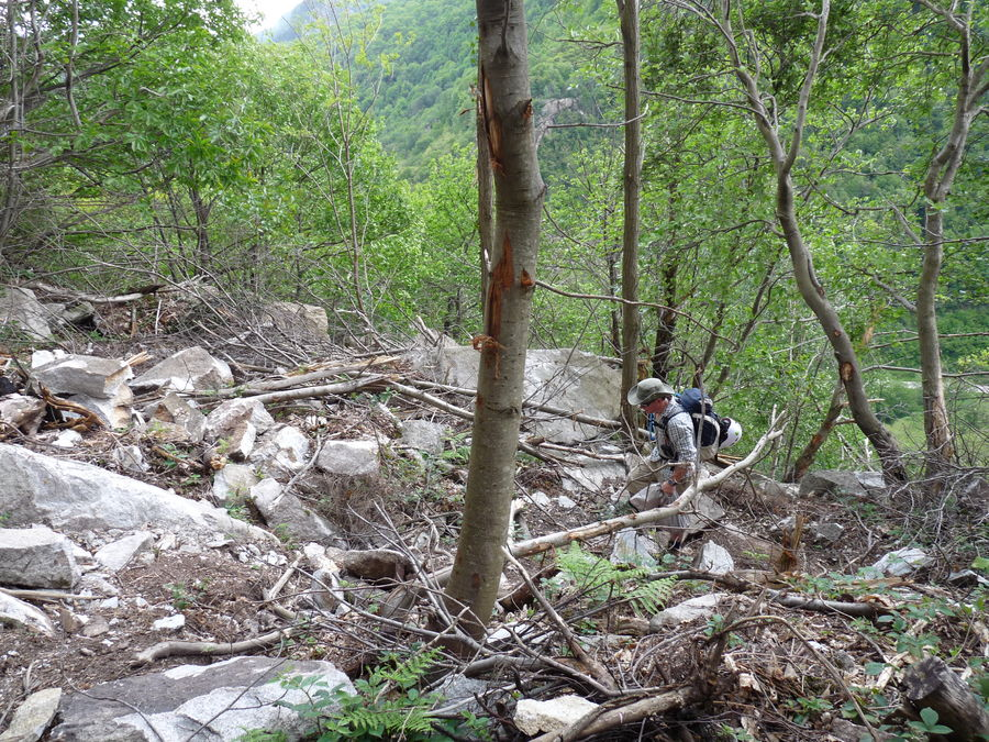 Example of the damage from the rockfall originating above the upper tier in Montcalm. Note the scars on the trees., 239 kb