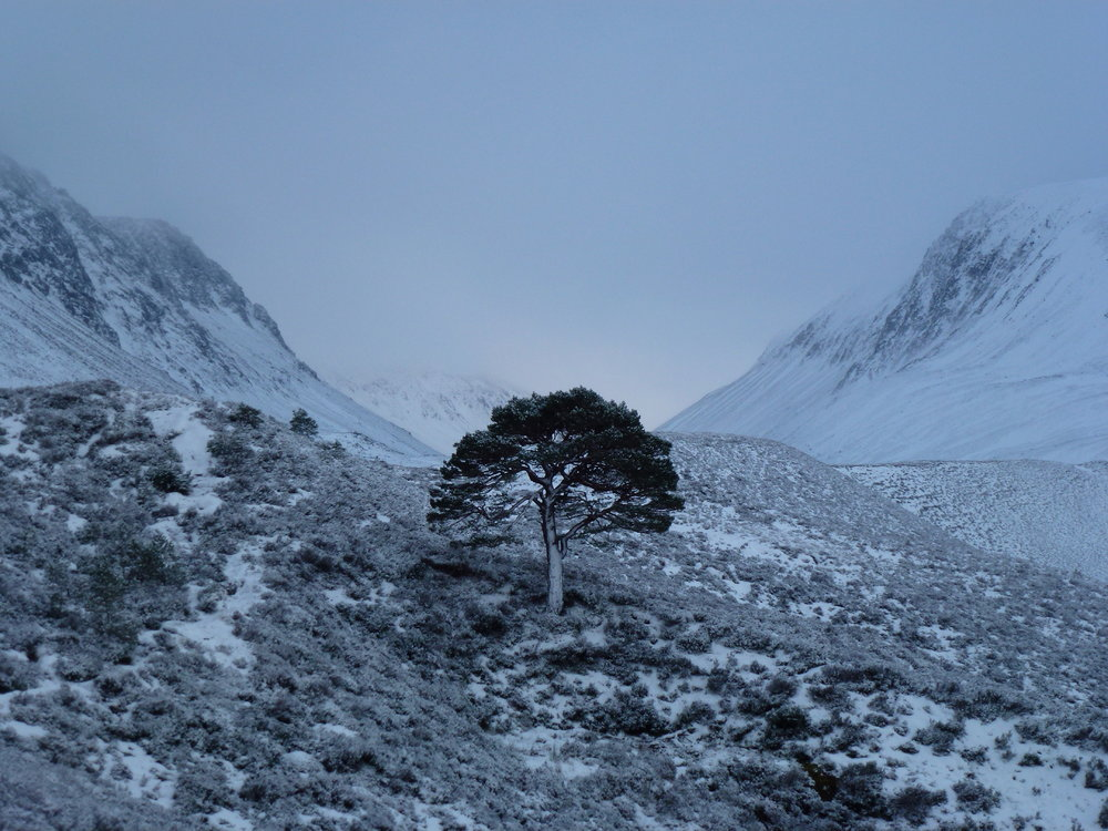 The Last Tree Up the Lairig, 171 kb