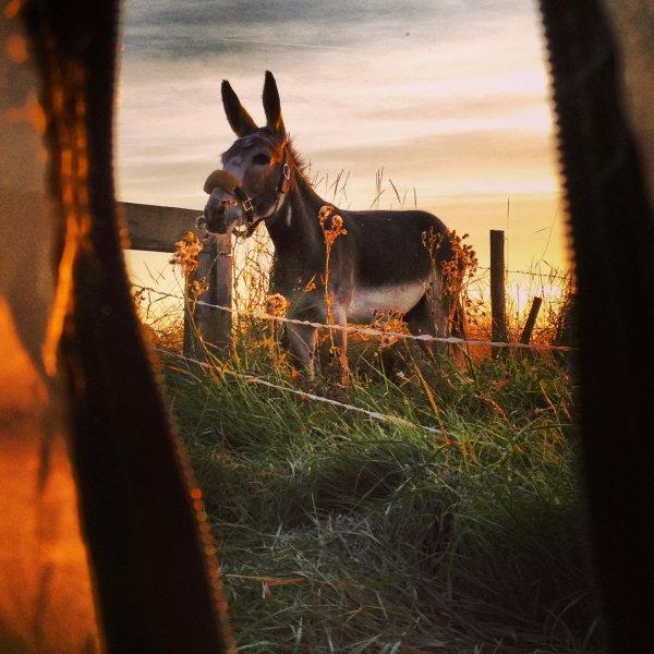 seaside donkey 2, 74 kb