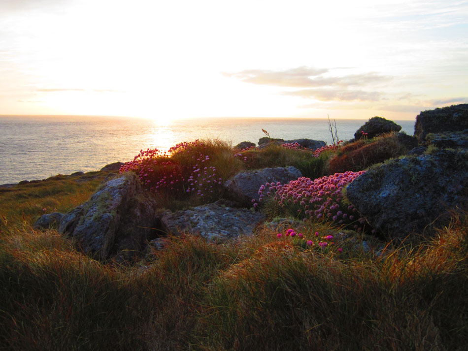 Wild flowers on Pabbay at sunset, 140 kb