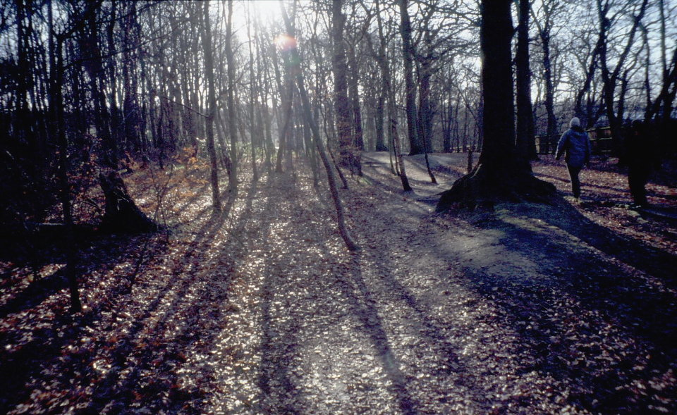 Highgate Woods, 186 kb