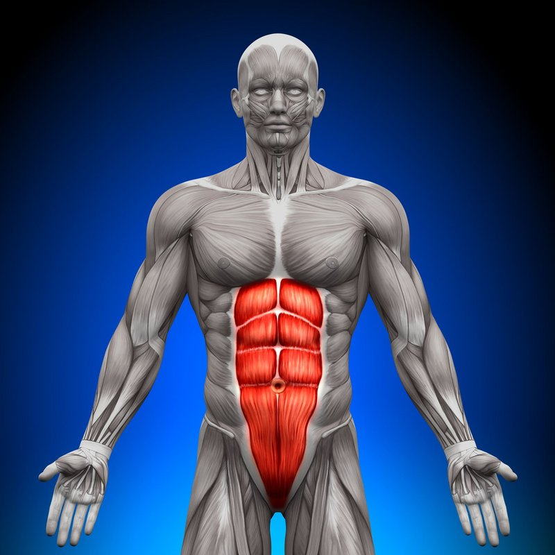 The abdominal core muscles, 78 kb