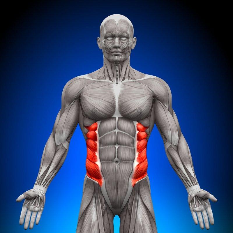 Oblique core muscles, 77 kb