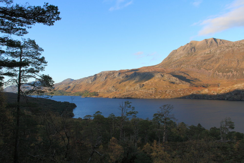 A rare fragment of native woodland by Loch Maree. Re-wilding would give us more places like this, 131 kb