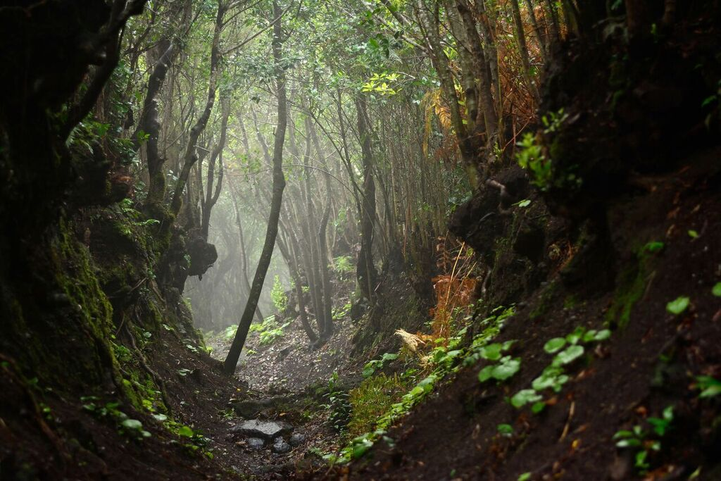 Stifling humidity and mist in the La Galga cloud forest, 139 kb