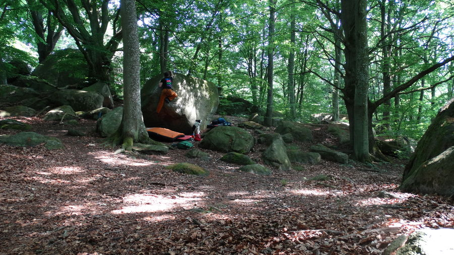 Forest bouldering, 198 kb