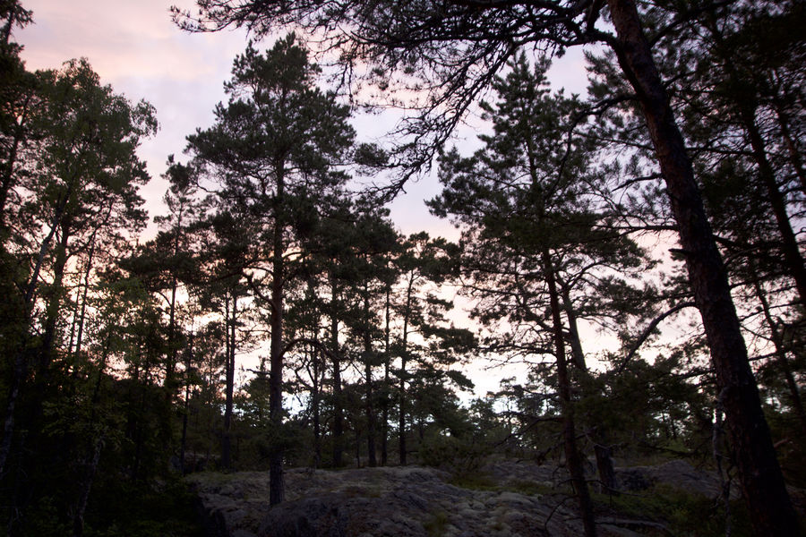 A glorious Swedish evening, 183 kb