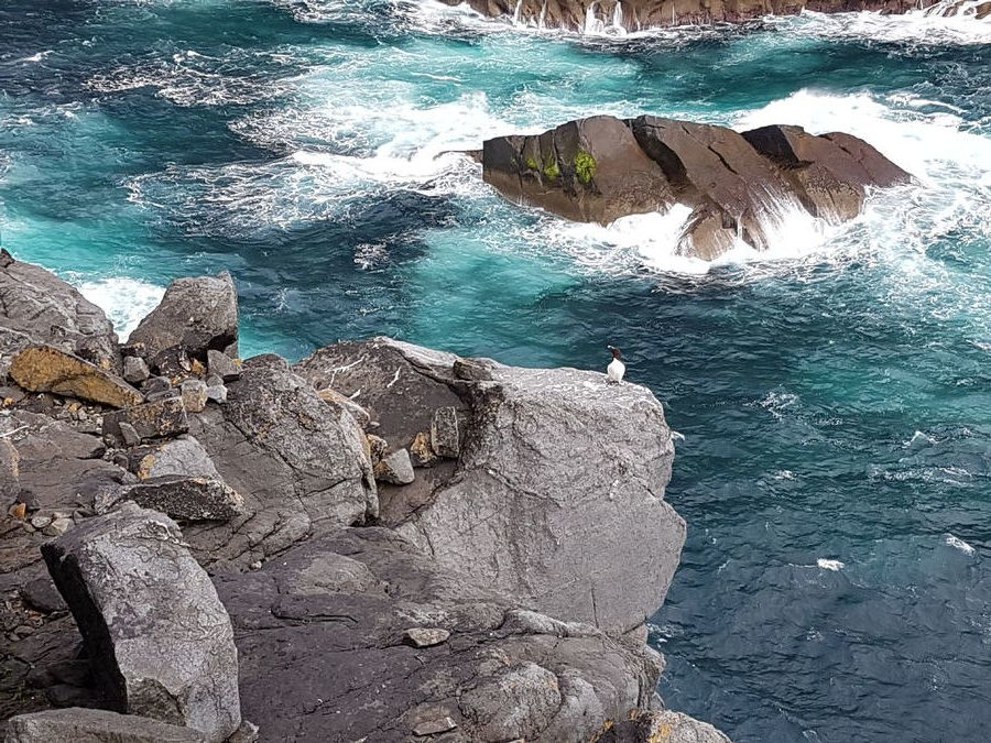 A guillemot watches as we abseil to the foot of Ruabhal, 192 kb