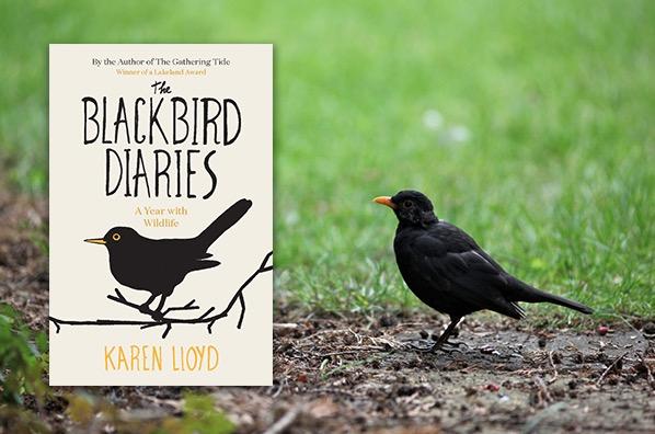 Blackbird Diaries, 72 kb