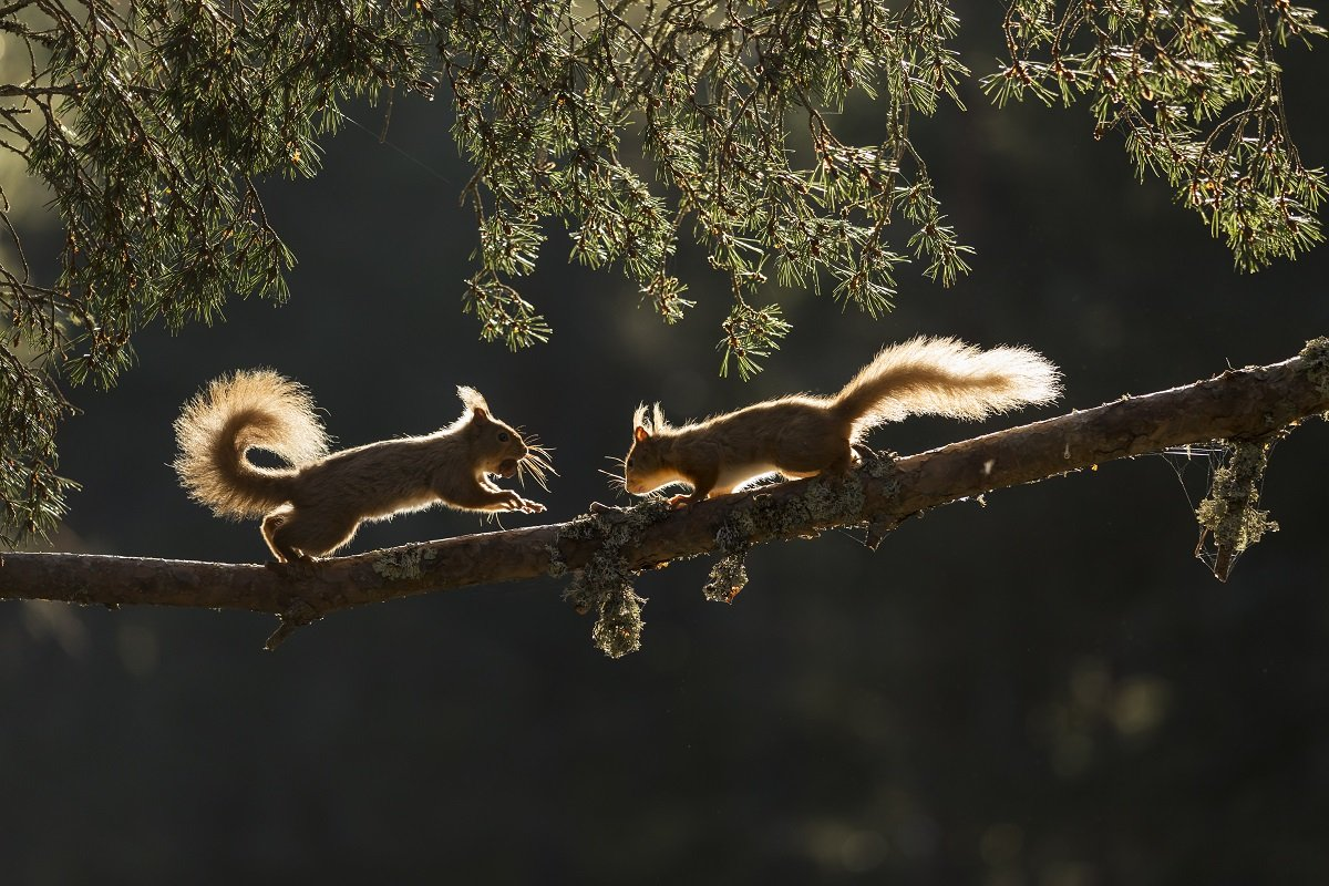 Local wildlife includes eagle, otter, pine marten and red squirrel © UKC News