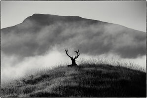 [Clashgour Stag © Mac fae Stirling]