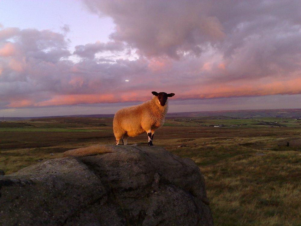 Bouldering Sheep, 95 kb