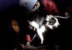 LLMRT dog rescue montage, 3 kb