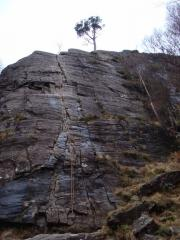 Pine Wall, Polldubh, Dec 08