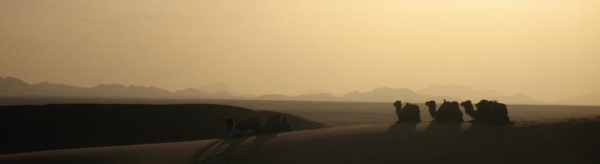The Todra Series - Camels at Erg Chebbi