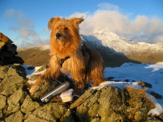 The Soul Of A Mountaineer - He Has That 1000 Yard Stare In His Eyes - Snowdon from Yr Aran in background