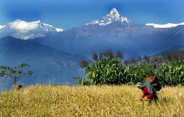 Machhapuchhare, the sacred Fish Tail mountain, Nepal