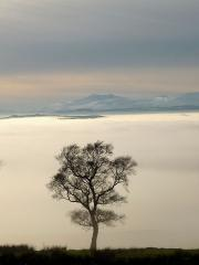 Blencathra and a tree