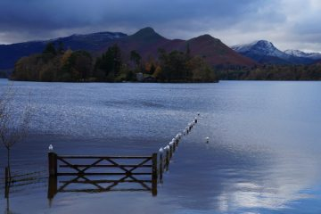 A gull on (almost) every post, Derwentwater