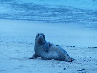 Camp seal