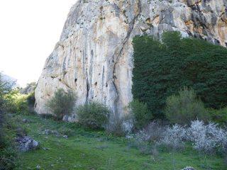 Ivy wall chilam Balam