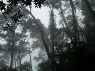 Inside Kinabalu jungle