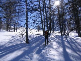 Skinning through the Larch woods, Queyras